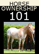 Horse Ownership 101